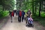Strecke durch den Wald