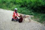 Suchhund nimmt Fährte auf