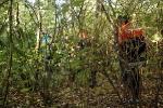 Suche im Unterholz